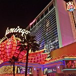 Flamingo- Front view from the strip