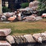 """Gotta check out the """"Flamingos""""!"""