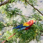 Colourful parrots and macaws throughout the grounds