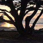 Cypress Tree, Carmel CA