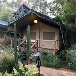 Wildebeest Eco Camp Photo