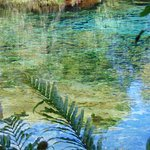 Photo of Te Waikoropupu Springs (Pupu Springs)