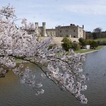 The castle is especially attractive in the Spring with blossom, daffodils etc.