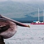 The beauty giant birds welcome you to the islands