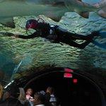 Feeding time at Ripley's Aquarium