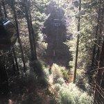 Photo de Trees of Mystery