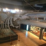 Photo of Museo Maritimo del Cantabrico