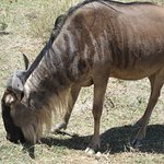 Photo de Ngorongoro Crater