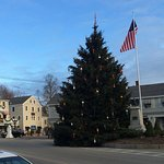 Kennebunkport town tree