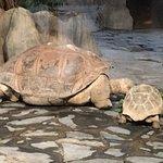 Das ist bis jetzt der größte Zoo den ich besucht habe. Tierarten von der ganzen Welt...man kann