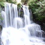Rainbow Springs Nature Park Foto