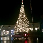 Kennebunkport tree at night!
