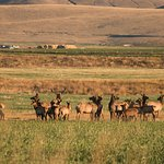 The Ranch is home to a diverse wildlife population including herds of elk, as well as deer and m