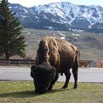 Yellowstone Gateway Inn Foto