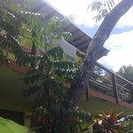 Villa-Bahia Apartments Foto