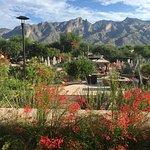 Photo of Westin La Paloma Resort and Spa