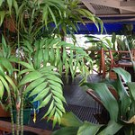 Cool and shady, you can choose to eat indoors or on the shady verandah