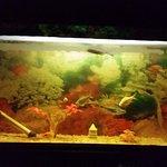 aquarium in the room