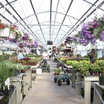 Showalter Orchard & Greenhouse