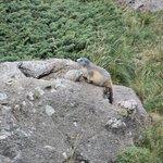 Si vous etes silencizux vous pourrez voir des tas de marmottes