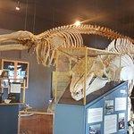 whale skeletins
