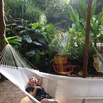 Foto de Mariposa Jungle Lodge
