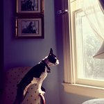 Sammy takes in the scenery from his perch in Henry's Room