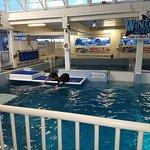 Clearwater Marine Aquarium Foto