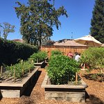 Veggie garden by the picnic tables where you eat