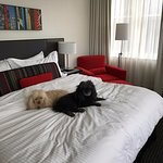 my Poodles chillaxin on the best bed ever!!!!