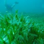 Tiny diver, big grass