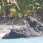 Crocodile Bay Resort Foto