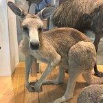 Photo of Melbourne Museum