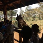 African Fund for Endangered Wildlife (Kenya) Ltd. - Giraffe Centre Foto