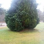 6m wide conifer blocking beautiful river view