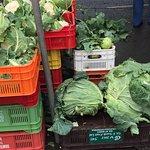 a massive cabbage