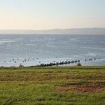 Hordes of eider ducks in summer.