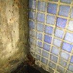 Ant infestation in shower