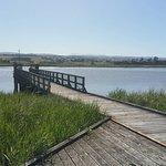 Tamar boardwalk
