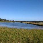 Tamar wetlands