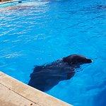 Foto de Dolphin Adventure by Vallarta Adventures