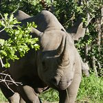 A Rhino on our game drive