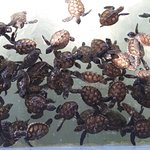 Sea Turtle Conservation Center, Sattahip Foto