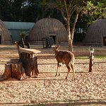 Photo of Mlilwane Wildlife Sanctuary