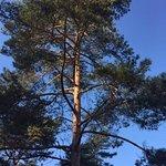 Prachtig weer, mooie bomen, veel vogels, een wandeling in ieder jaargetijde is een aanrader