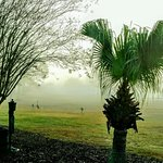Foggy morning on golf course, resident Sandhill Cranes and our on-site golf cart repair.