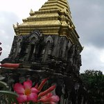 Wat Chiang Man, and pretty flowers