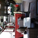 The Martello Bar