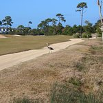 You'll find plenty of wildlife on this course, as well as the Cucina cart paths !