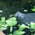 SeaWorld Orlando Foto